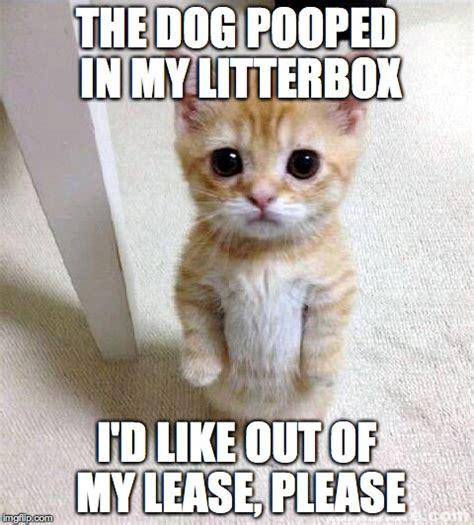 Cute Kitty Meme - cute cat meme imgflip