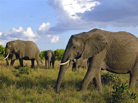 Masai Mara  maasai Mara National Reserve