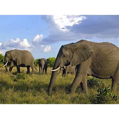 Masai Mara |Maasai National Reserve