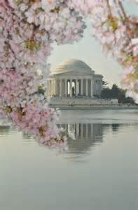 Jefferson Memorial Cherry Blossoms Washington DC