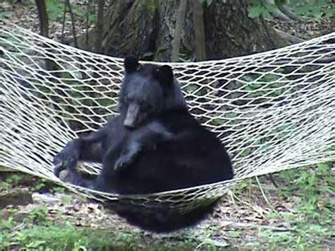 Relaxing In A Hammock by Black Relaxing On Hammock