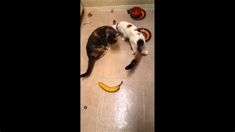 banana afraid cats sneaky