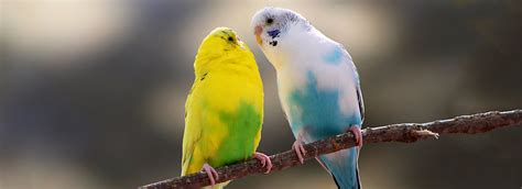 Birds as Pets: Care Information | PetSmart