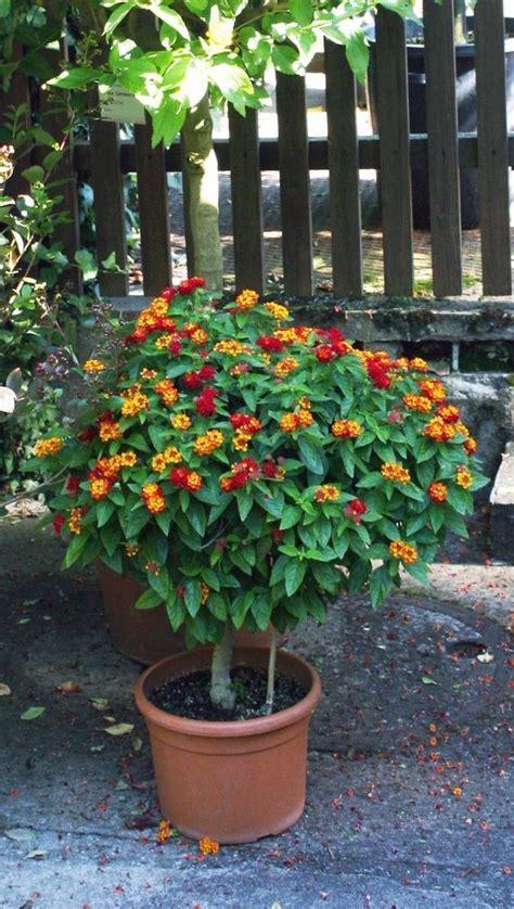 Welche Hortensien Koennen Sie Im Kuebel Wachsen Lassen by K 252 Belpflanzen Richtig 252 Berwintern Gartenarbeiten
