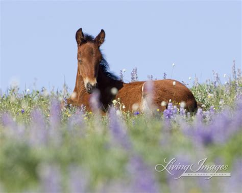 horse photography photographing wild horses  living images