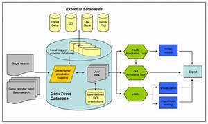 Flowchart Of The Genetools Program And The Underlying D