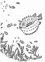 Puffer Fish Coloring Printable Deep Sea Nemo Blowfish Coloringpagesfortoddlers Dari Artikel Finding Colorir sketch template