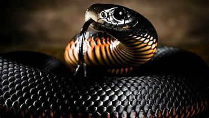 Mamba Snake Wallpapers Desktop Wallpapersafari Code