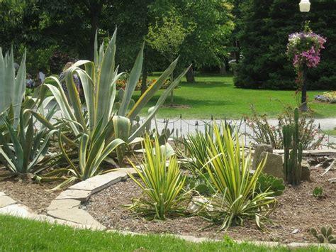garden fiori e piante fiori e piante cura piante appartamento come creare un