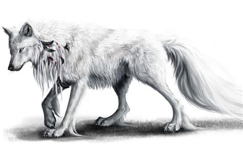 white wolf  plumas negras fondos de pantalla white wolf