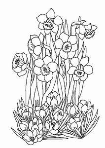 coloriage les fleurs du printemps With comment faire des couleurs avec de la peinture 8 les oiseaux en fiches coloriages photos et dessins avec