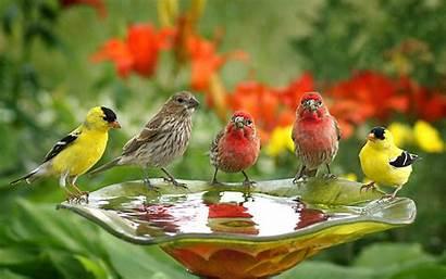 Birds Wallpapers Water Drink Wallpapers13 Resolution