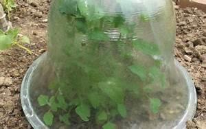 Carré Potager Gamm Vert : potager plantes et jardins gamm vert ~ Dailycaller-alerts.com Idées de Décoration
