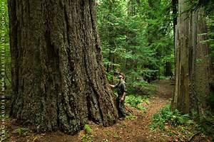 Goddards Grove Willamette National Forest Oakridge