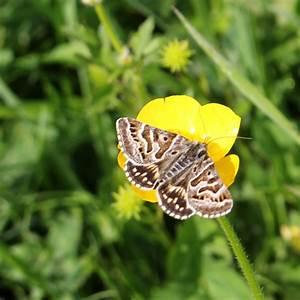 Moths in the light of day | earthstar