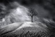 Tree Black and White Art Photography