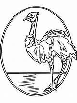 Emu Coloring Pages Australia Birds Illustration Printable Recommended Bright Popular Mycoloring sketch template