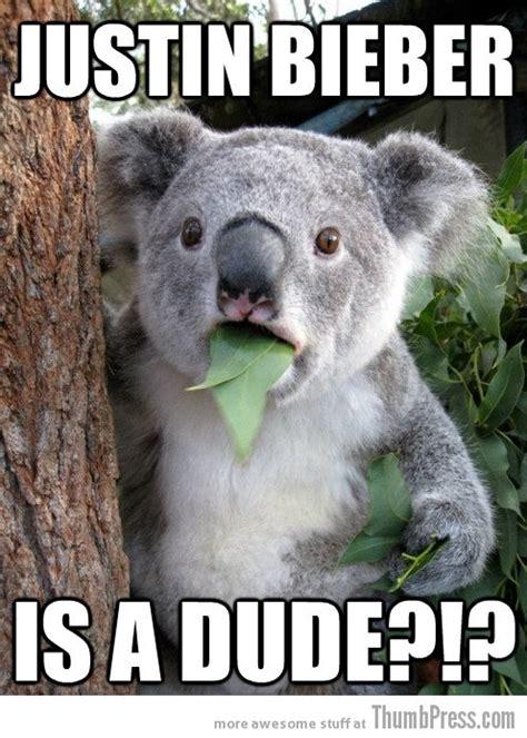 Meme Generator Koala - shaved bear meme 28 images hairless bear best 25 shaved bear ideas on pinterest which