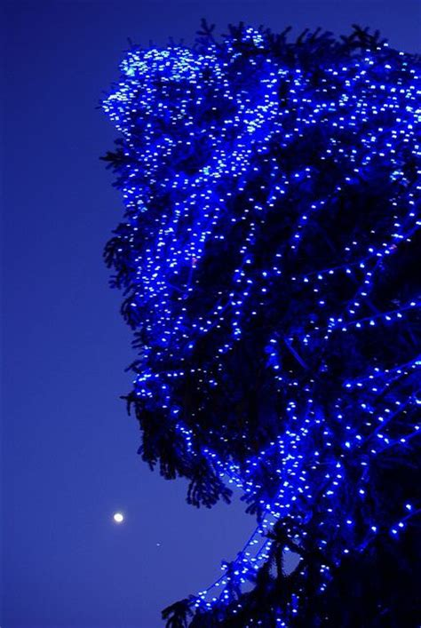 40 best images about blue christmas on pinterest