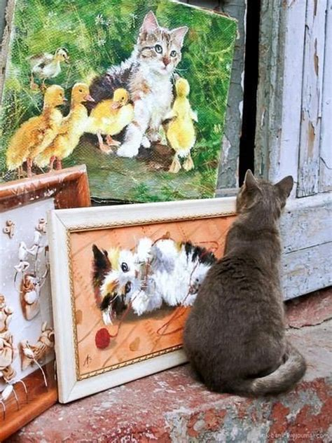 funny cat poses picturescraftscom