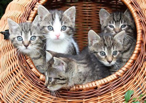 steigerst du die lebenserwartung deiner katze