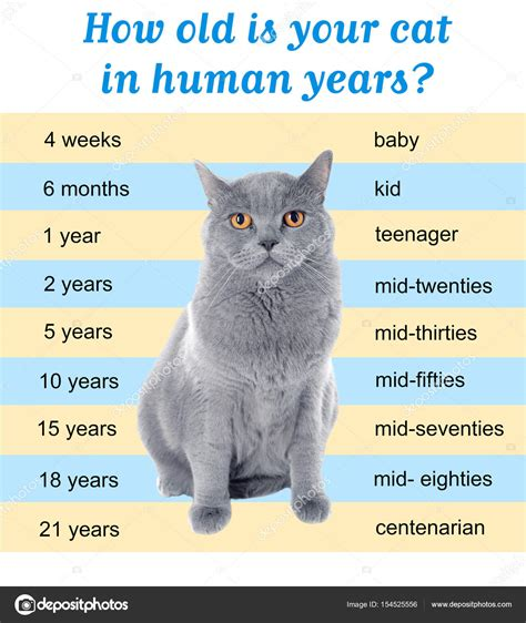 Pet Age Concept Comparison Chart Of Cat And Human Years
