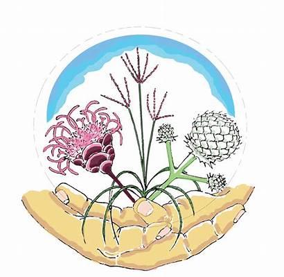 Sustainable Clipart Biodiversity Rain Landscape Landscapes Creating