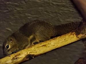 Online Diet Planner Plantain Squirrel Animal Experiences At Wingham Wildlife