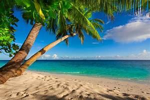 Bilder Von Palmen : fotos von strand meer natur palmen horizont ~ Frokenaadalensverden.com Haus und Dekorationen