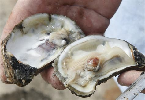 sarasota man dies  eating bad oyster state