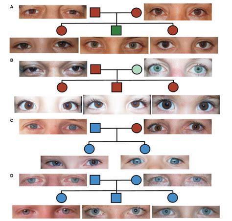 Forme d'yeux forme des yeux . wordreference forums