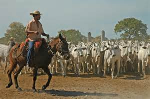 Cattle Ranch Cowboys