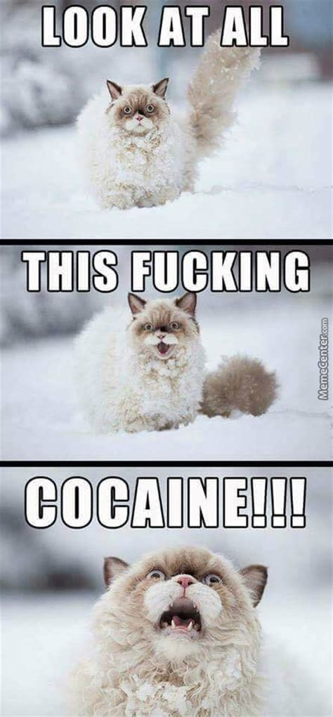 Cocaine Cat Meme - if you want to hang out you ve gotta take her out cocaine by marstonfan94 meme center