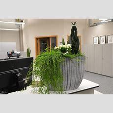 Doris Liebt Pflanzen So Verwandeln Sie Ihr Büro In Eine