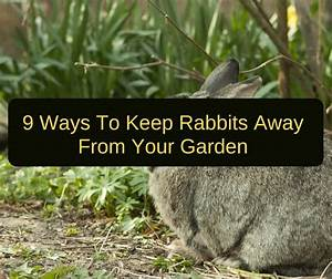 Keeping rabbits out of garden plants garden ftempo for How do i keep rabbits out of my garden