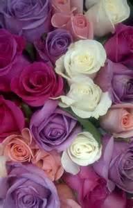 cuisine mauve la signification des roses quelle couleur de roses offrir