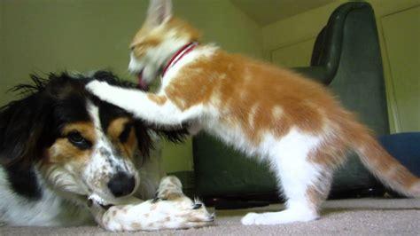 dog   quietly enjoy bone cat   play
