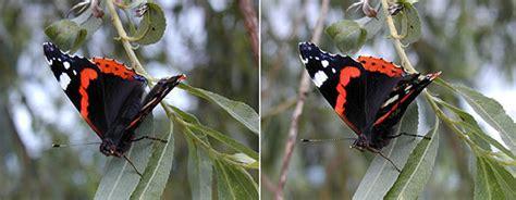 kleiner schmetterling kleiner schmetterling 3d foto bild stereoskopische raumbilder spezial bilder auf fotocommunity