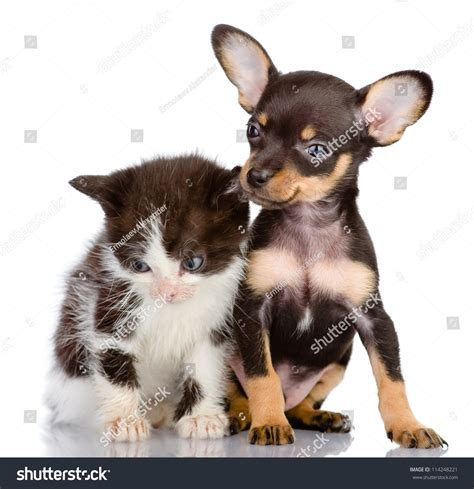 Sad Kitten And Smiling Dog. Isolated On A White Background ...
