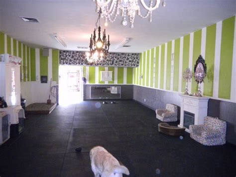 best 25 indoor rooms ideas on indoor 308 | e9c010760754839c55ed7f7bdb1cddc7 dog daycare daycare ideas