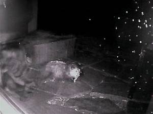 Cats out back (now w/ night vision pics) (sleeping, food ...