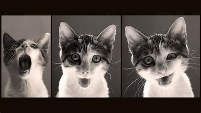 Funny Cat Meme Grumpy Humor Wallpapers Wallpaperup