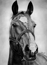 Pencil Drawing of Horse Head Sketch