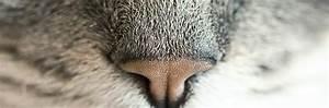 Litiere Chat Sans Odeur : 8 astuces contre les mauvaises odeurs de liti re du chat ~ Premium-room.com Idées de Décoration