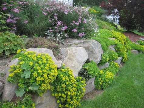 drought tolerant ground cover pin by junie on out front pinterest