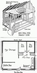 Why to Raise Dairy Cows or Goats | Dairy, Fluffy cows and ...