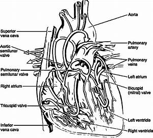 49 Anatomy And Physiology Coloring Pages Free  Anatomy And