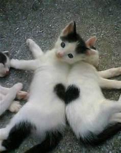 Cats | Johanna's Blog