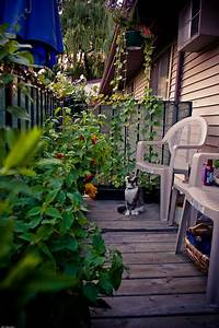 Five, Ways, To, Beautiful, And, Productive, Balcony, Gardens, U2013, Permacultured