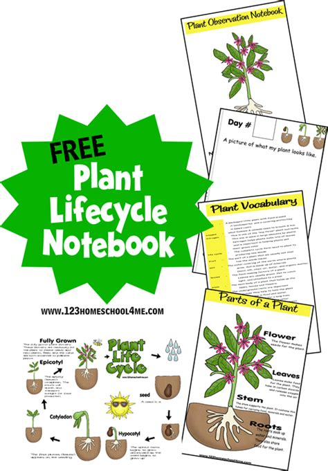 free plant life cycle printables for spring free